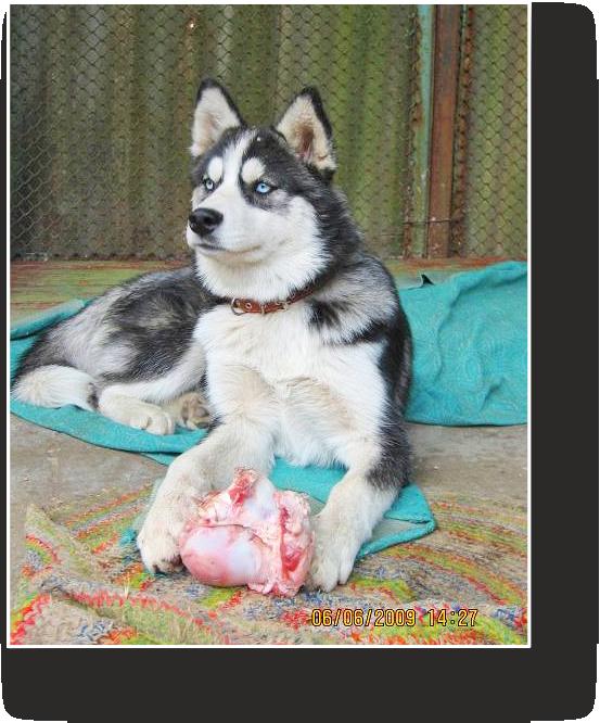 Royal Canin Sensitivity Control в Украине. Сравнить цены